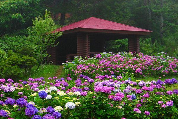 Flores - Hortênsias - Buques